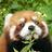 The profile image of foxkitsune2501