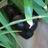 Clifton Hill cat