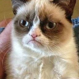 Grumpy Cat Social Profile