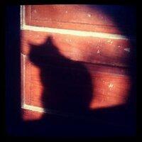 Fuchsia | Social Profile