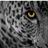 leopardthinks profile