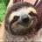 Sloth sanctuary