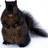 CanadianSquirrel