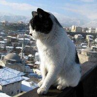 Y.Itau | Social Profile