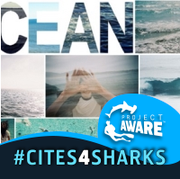 ISF_Oceans Social Profile