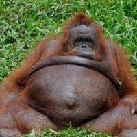 Fat Gibb | Social Profile
