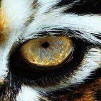Tiger Bookstore | Social Profile
