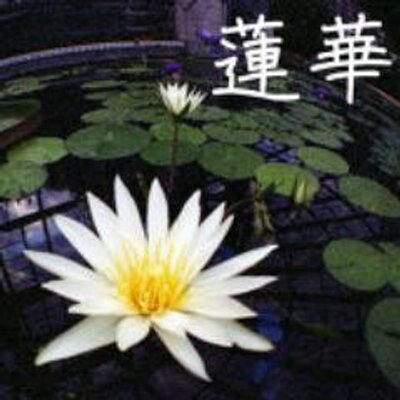 蓮華@社会復帰 | Social Profile