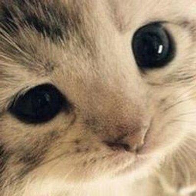 BxB小猫   Social Profile