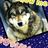 The profile image of wolf34_99