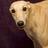 greyhoundb1 profile
