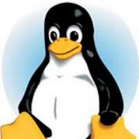 Wild Penguin | Social Profile