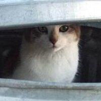 kat_gevonden
