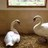 Twitter result for Amazon UK from Swan_Sanctuary