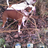 lynda_bul profile