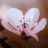 @Sparkle_Chi