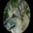 @ladywolfzes