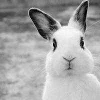 Little White Rabbit | Social Profile