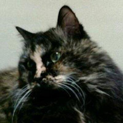 mamecat 世捨て猫 | Social Profile