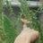 mary_barut