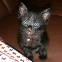 maman du chat noir | Social Profile