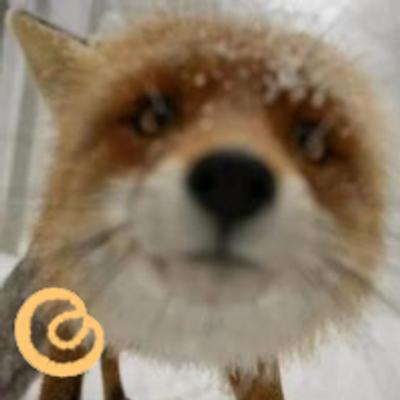 Fox | Social Profile