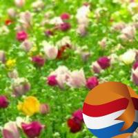 bloemeveld