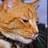 Gala_Kitty profile