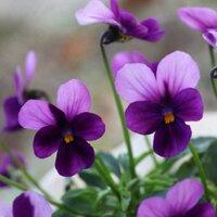 kleingartenmotta | Social Profile