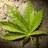 Cannabis Credit