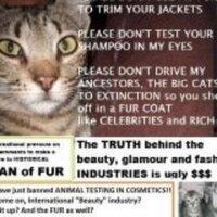 Occupy UN 4 Animals | Social Profile