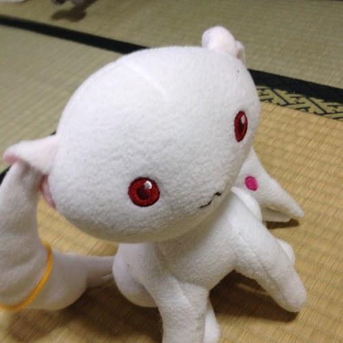 ヤス@たぬき Social Profile