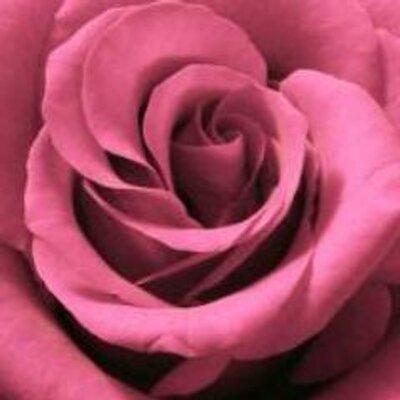Roses  | Social Profile