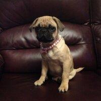 VIP Pet Services   Social Profile