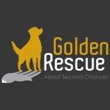 Golden Rescue Social Profile