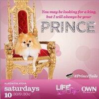 Prince the Pom | Social Profile