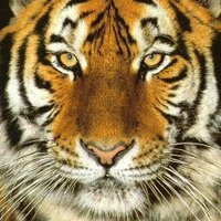 tigerrrrrr | Social Profile