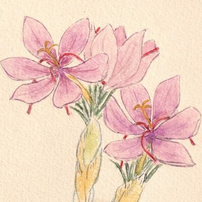 番紅花舎(さふらんしゃ) | Social Profile