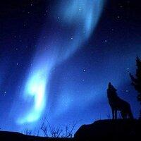 Wolfapo