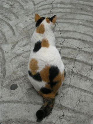 三毛猫の画像 p1_14