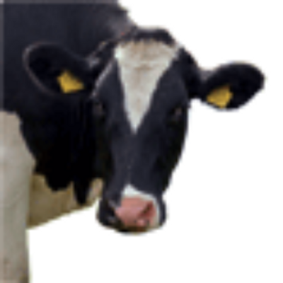 The Moo Man | Social Profile