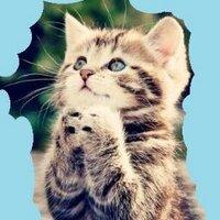 迷子の子猫 | Social Profile