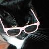 catsparella Social Profile