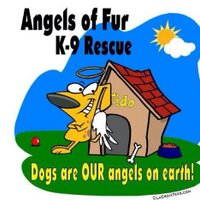 AngelsOfFur K9Rescue | Social Profile
