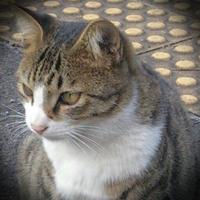 こじま じゅん | Social Profile
