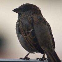 Summer Raven | Social Profile