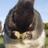 nida 【悲報】鶏むね肉 3割以上の大幅値上げへ