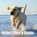 #AcheiCaeseGatos's Twitter Profile Picture