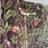 rosesouslapluie profile