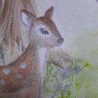 コタマネギ | Social Profile